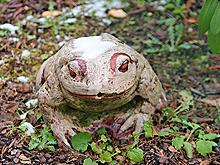 Ein kleiner Stein-Frosch